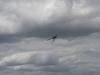 flugtag_elbtal-modellhelicopter_20120603_1326006133